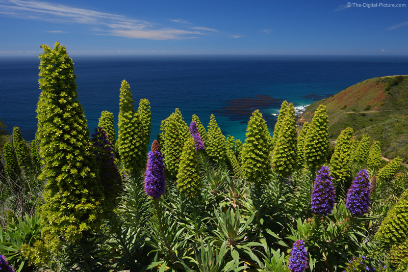 Large Purple Flowers, Big Sur