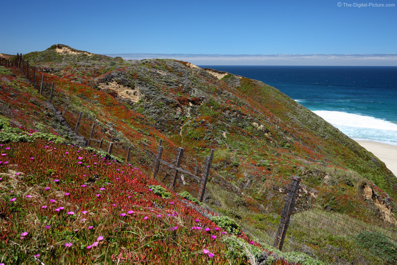 Ice Plant, Big Sur
