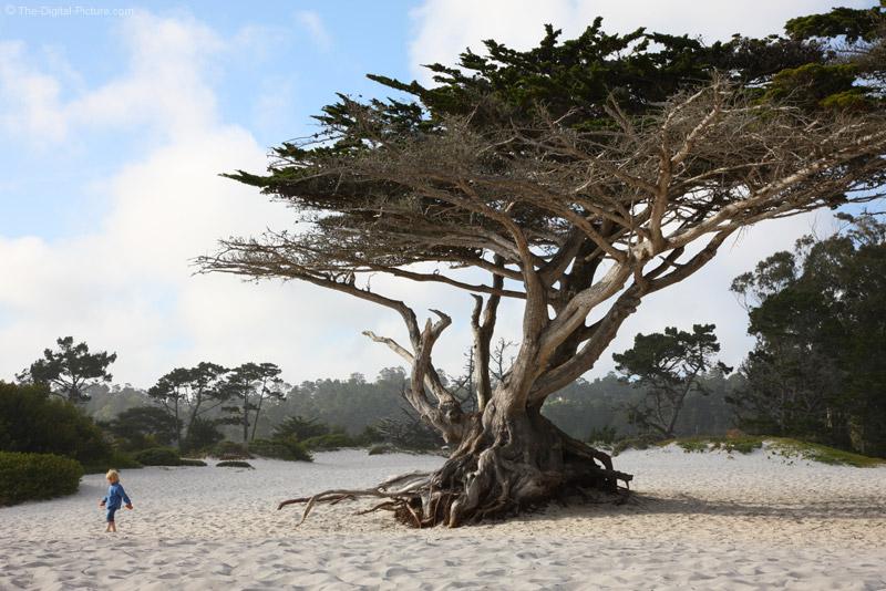 Wind-Swept Tree, Carmel, California