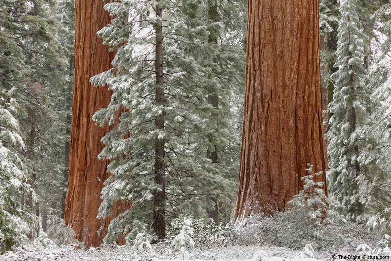Snow in Kings Canyon National Park