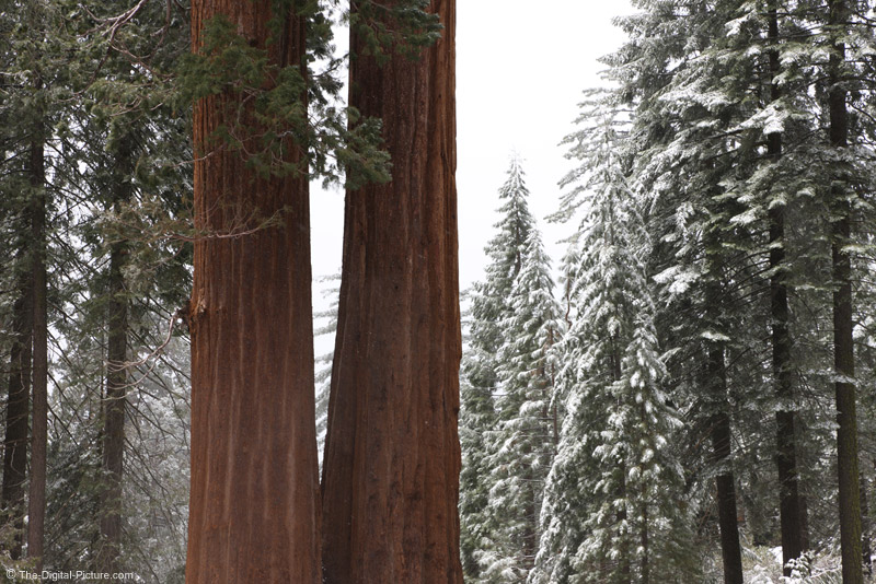 Land of the Giants, Kings Canyon National Park