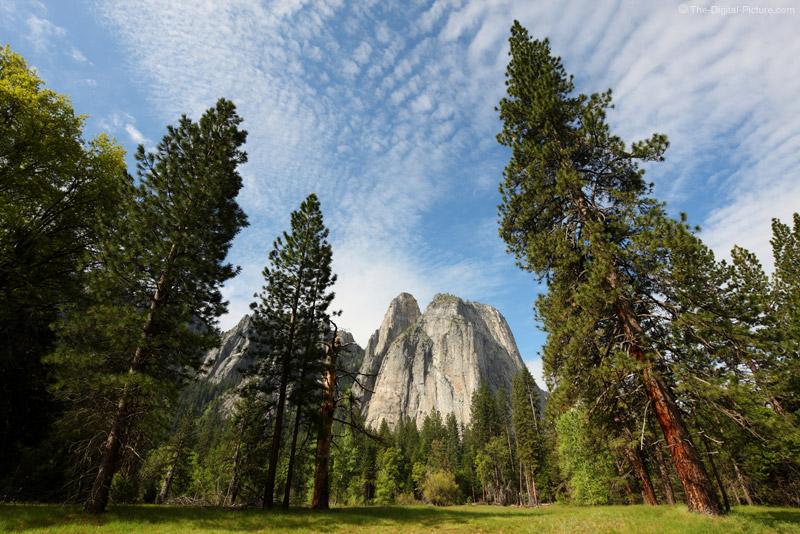 Towering Pines and Cathedral Rocks, Yosemite National Park