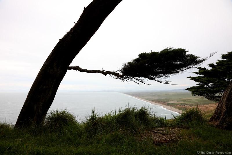 Windswept Tree, Point Reyes National Seashore