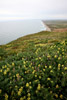Great Beach, Point Reyes National Seashore