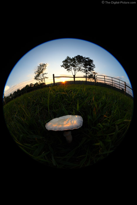 Sunset Reflections on a Mushroom