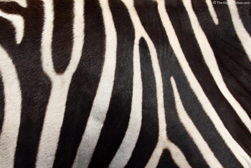 Real zebra pattern - photo#1