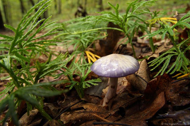 Purple Mushroom Picture