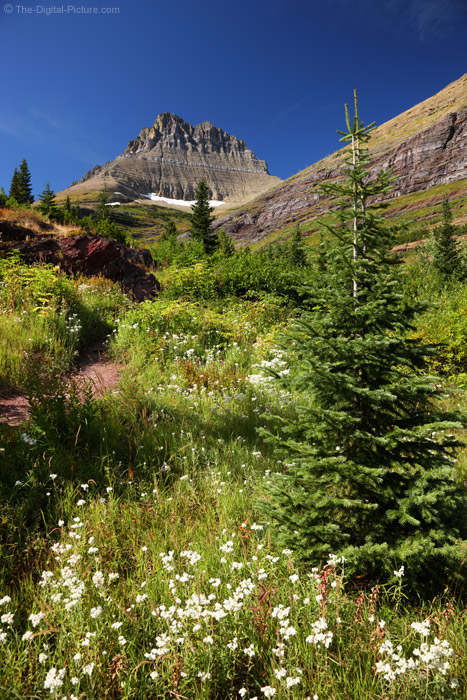 Alpine Meadow, Glacier National Park