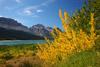Fall Color at Lake Sherburne, Glacier National Park