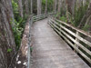 Corkscrew Swamp Wildlife Refuge