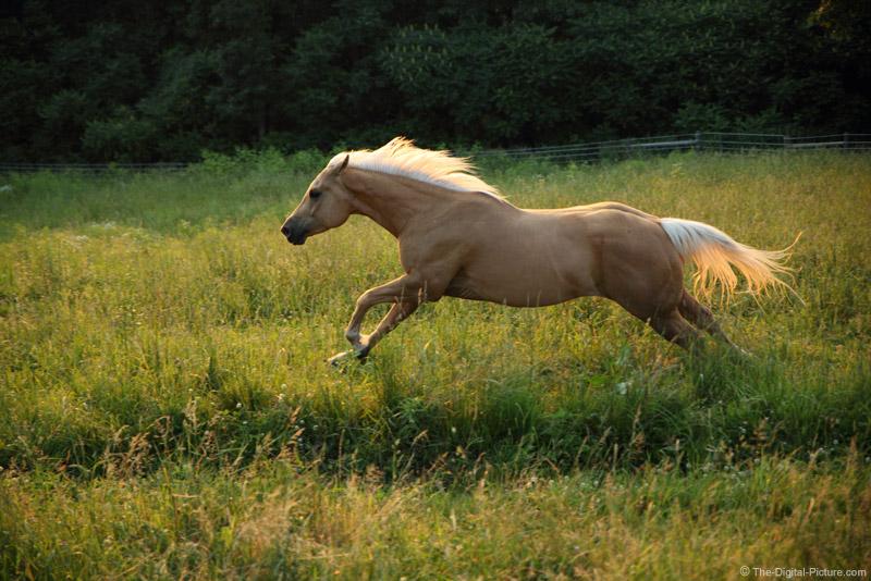 Horse Running Wildly