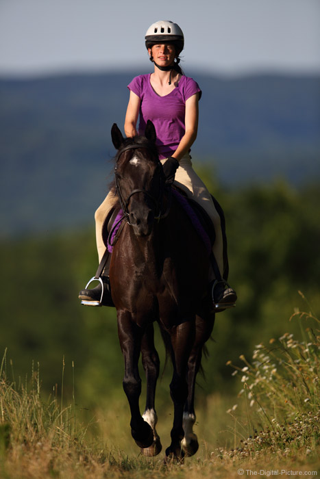 A Late Day Gallop
