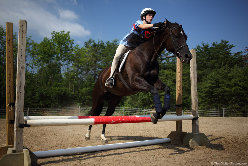 Double Pipe Horse Jump