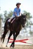 Backlit Horseback Riding