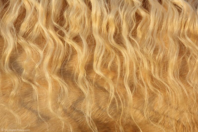 Curly Palomino Horse Mane