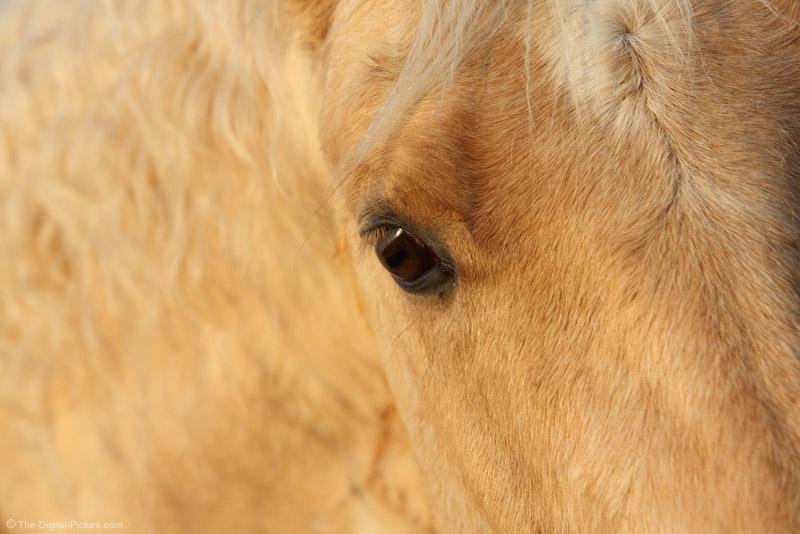 Eye of a Palomino Horse