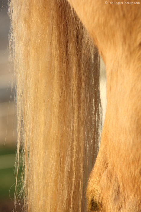 Palomino Horse Tail
