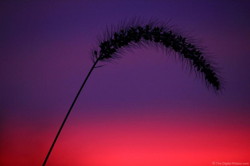 Sunset Under Field Grass