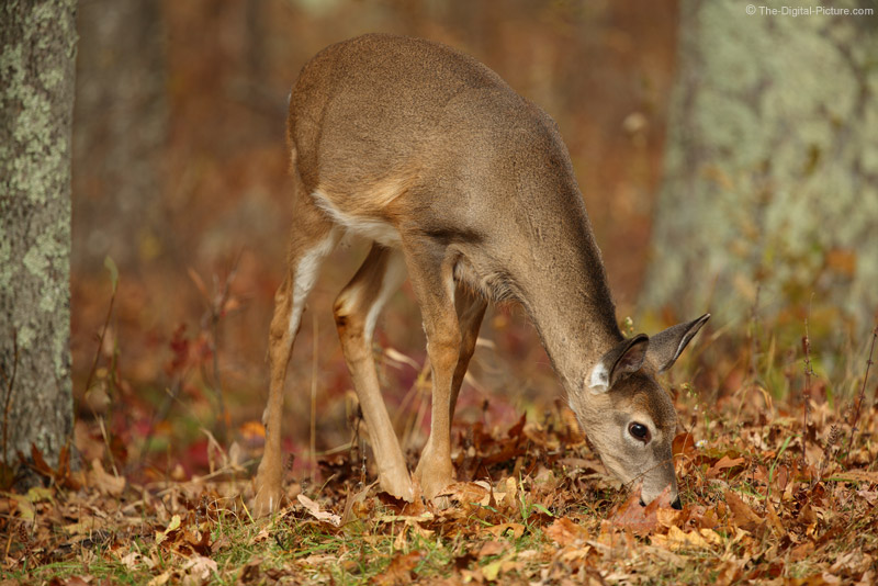 Dear Little Deer