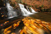 Rose River Trail Falls and Swirling Leaves