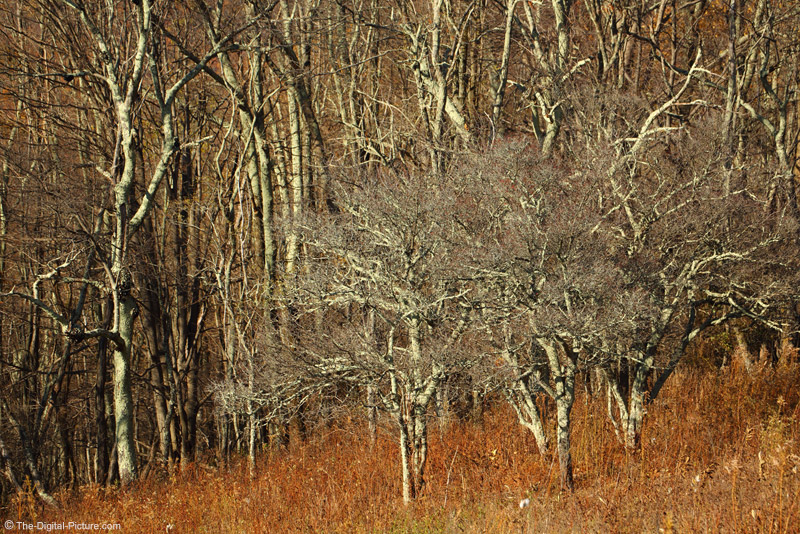 Bare Trees, Shenandoah National Park