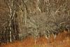 Bare Trees, Shenandoah National Park