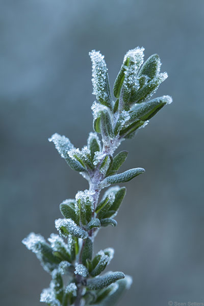 Winter Photography Tips: Shoot Macros