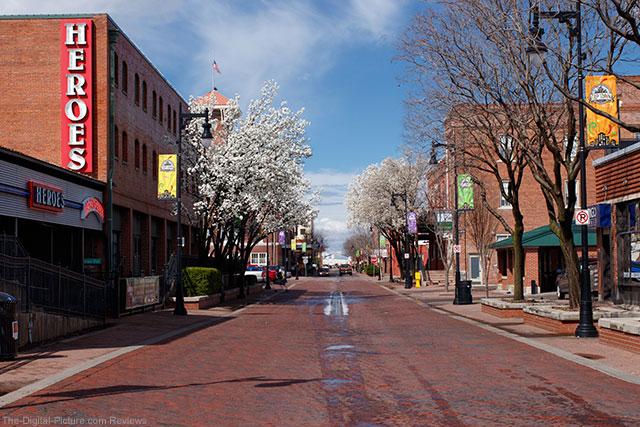 Trees Beginning to Bloom Wichita KS