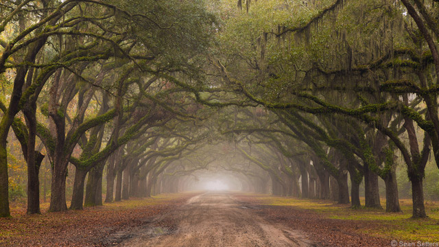 Wormsloe Historic Site Morning Fog