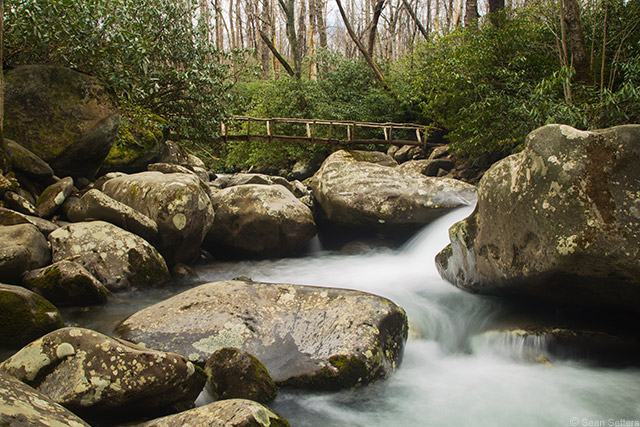 Porters Creek Trail, Great Smokey Mountains National Park #1
