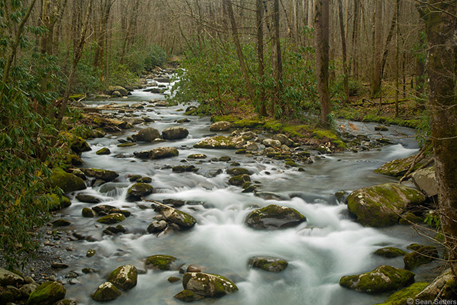 Porters Creek Trail, Great Smokey Mountains National Park #2