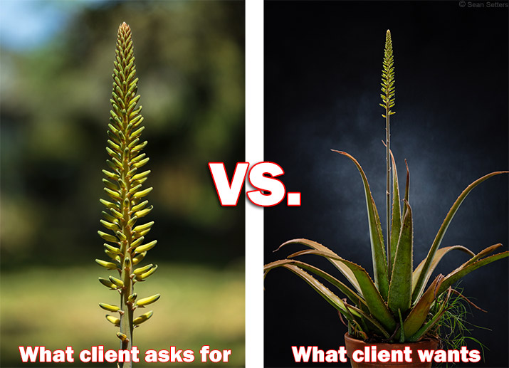 What Client Asks For vs. What the Client Wants