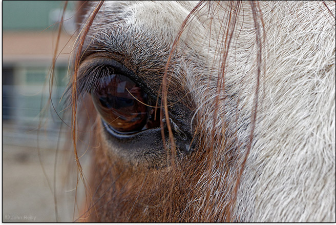 Canon EF-M 28mm f/3.5 Macro IS STM Lens Sample Image (Horse)