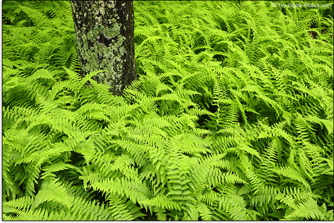 Canon EOS Rebel SL3 Ferns Sample Picture