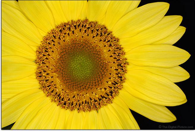 Sunflower lit with Macro Ring Lite
