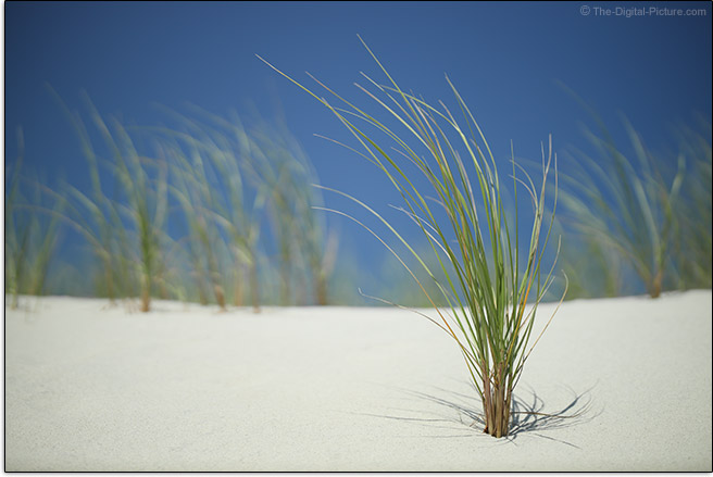Canon RF 85mm F1.2 L USM Lens Beach Grass Sample Picture