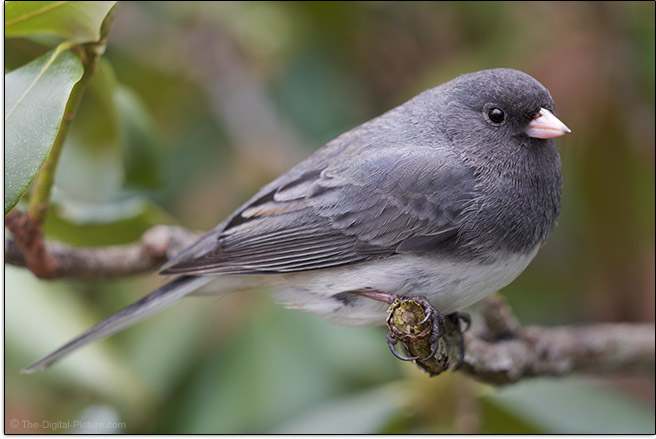 Junco Sigma 100-400mm f/5-6.3 DG DN OS Contemporary Lens Sample Picture