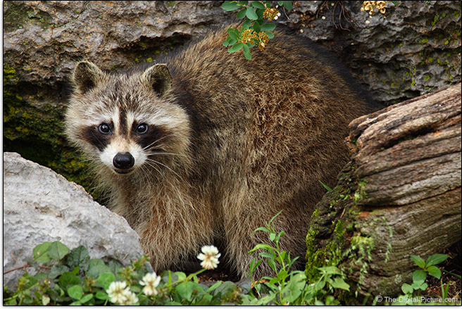 Wildlife Sample Picture