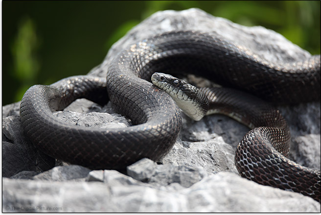 Snake Sample Picture