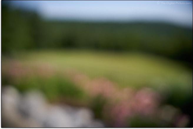 Sigma 24-70mm f/2.8 DG DN Art Lens Maximum Blur Example