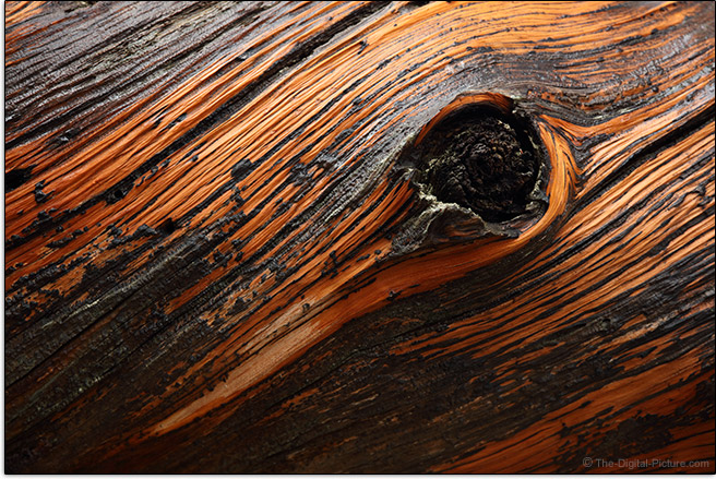 Sigma 24-70mm f/2.8 OS Art Lens Sample Picture of Knot in Log