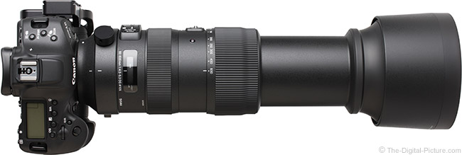 Sigma 60-600mm f/4.5-6.3 DG OS HSM Sports Lens Extended View with Hood