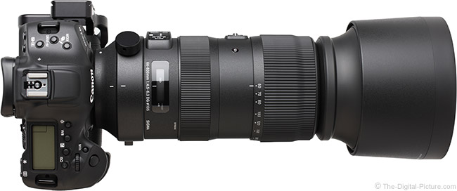 Sigma 60-600mm f/4.5-6.3 DG OS HSM Sports Lens Top View with Hood