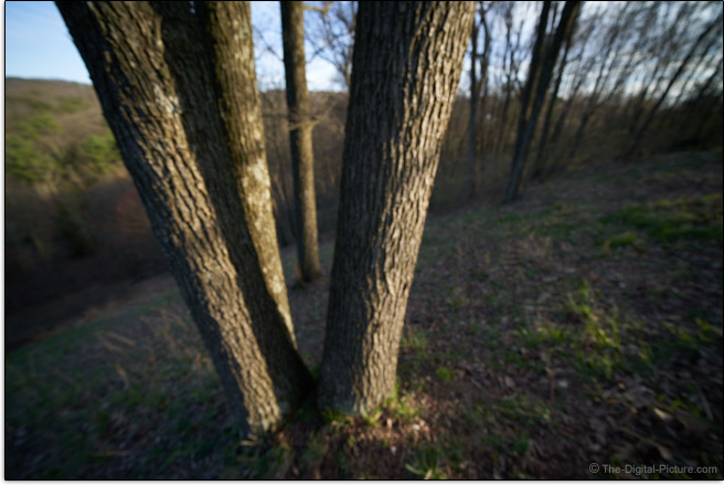 Sony FE 12-24mm f/4 G Lens Maximum Blur Example