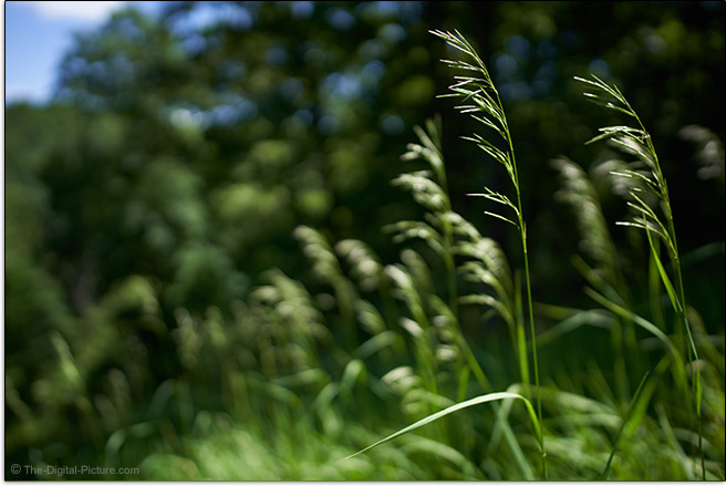 Sony FE 24mm f/1.4 GM Lens Grass Sample Picture