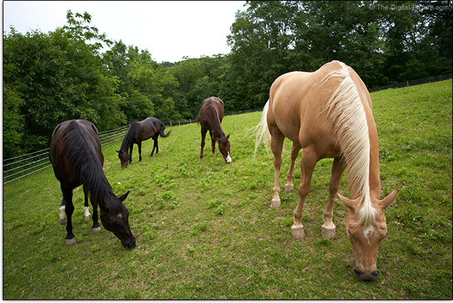 Sony FE 24mm f/1.4 GM Lens Herd of Horses Sample Picture