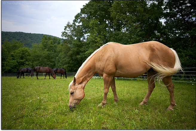 Sony FE 24mm f/1.4 GM Lens Horse Sample Picture