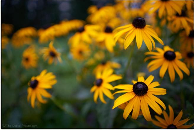 Sony FE 28mm f/2 Lens Maximum Blur Example