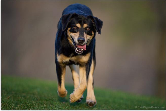 Sony FE 400mm f/2.8 GM OSS Lens Dog In Flight Sample Picture