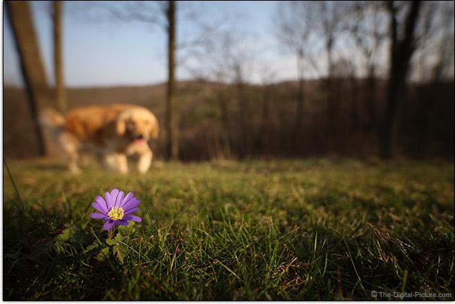 Zeiss 15mm f/2.8 Distagon T* ZE Lens Maximum Background Blur